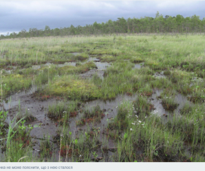 Два тижні в болоті: подробиці зникнення 82-річної жінки на Прикарпатті