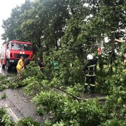 Негода повалила на Прикарпатті 175 дерев та пошкодила дахи на будинках