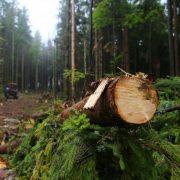 Гори лисіють: у Карпатах продовжують знищувати ліси