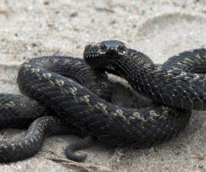 Змія напала на господаря на власному подвір'ї (відео)