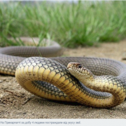 Агресивні плазуни: у Калуші чоловіка вкусила змія