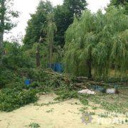 На Прикарпатті чоловіка придавило деревом. Потерпілий помер
