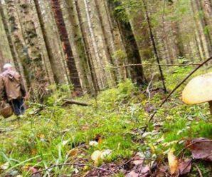Пішов по гриби: у лісі на Франківщині зник чоловік