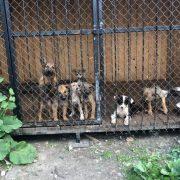 Калуський притулок для собак переповнений — волонтери
