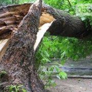 Дивом залишилися живі: дерево придавило трьох дітей (відео)