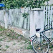 На Прикарпатті велосипедист в'їхав у автівку і від травм помер у лікарні (фото)