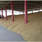 На Прикарпатті вже намолотили 236 тисяч тонн зерна