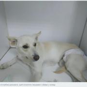 """Волонтери калуського """"Дому Сірка"""" просять небайдужих допомогти оплатити лікування собаки"""