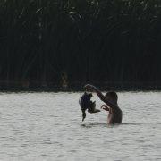 Зареєстровано петицію щодо заборони полювання на дичину на Прикарпатті