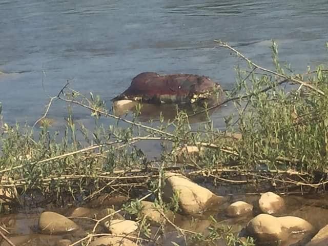 Люди звідти п'ють воду: у Лімниці знайшли труп невідомої тварини (ФОТО)