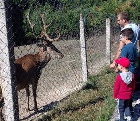 Прикарпатців закликають приносити гостинці для Центру реабілітації диких тварин
