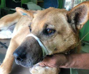 В Калуші наркомани познущались над безпритульними собаками. ФОТО 18+