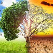У світі надзвичайний екологічний стан – ООН