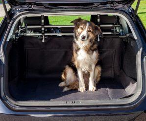 За вміст багажника українських водіїв каратимуть (деталі)