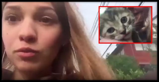 «Фейк или живодерство»: запорожцев шокировало видео, где девушка ради лайков утопила котенка (ВИДЕО)