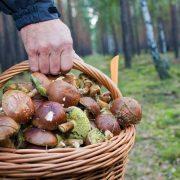 На Франківщині в лісі заблукав грибник