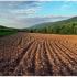 На Прикарпатті сільрада незаконно віддала в користування 22 гектари землі