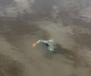 На Прикарпатті у річці виловили тіло 46-річного чоловіка