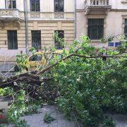 У Франківську через сильний вітер дерево впало просто на дорогу (ФОТО)
