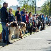 В Івано-Франківську пройшла виставка собак(ФОТО)