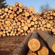 Скасують заборону на вивезення лісу-кругляку з України