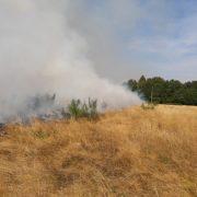 Через пожежу трави в Боднарові міг згоріти ліс
