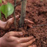 Осінь – краща пора для посадки дерев