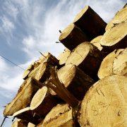 """З п'ятниці на Прикарпатті перевозитимуть лише """"чіповану"""" деревину"""