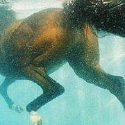 У Яремче кінь впав у басейн готелю преміум-класу