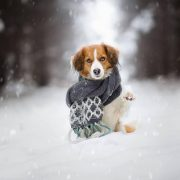 Морози та сніг: в Україну йде антициклон