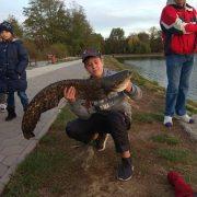 Вагою 8,6 кілограм та понад метр в довжину: у франківському озері спіймали величезного сома (фото)