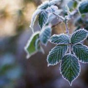 Синоптики обіцяють сильні заморозки в Україні