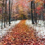 До мінус 23: у жовтні в Україні очікуються сильні морози