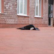 Смертельно хвора жінка викинулася з вікна на очах у сина (фото, відео)