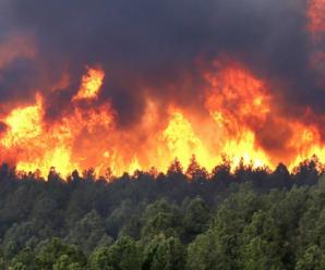 На Прикарпатті горить ліс