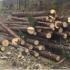 На Прикарпатті в Осмолодівському лісгоспі проводять обшуки