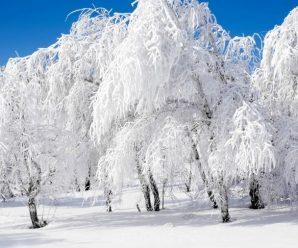 Мороз -20 і сильний сніг: синоптики дали прогноз, коли прийде справжня зима