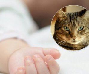 """""""Кіт-вбивця"""": Трагічна смерть немовляти. Мати просто відійшла на кілька хвилин"""