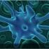 """Як бактерії """"переходять"""" до людини: дослідили механізм"""