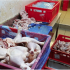 У польській курятині знову виявили сальмонелу