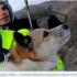 Уперше в Україні собака з притулку стала рекордсменкою України. ФОТО+ВІДЕО
