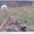 В Івано-Франківську вандали звалили електричний стовп. ВІДЕО