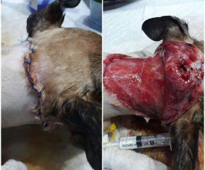 У міському парку собака за присутності власника зняла скальп з іншої – шукають свідків інциденту (ФОТОФАКТ)