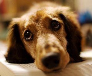 На Прикарпатті надзвичайники врятували від жахливої смерті двох собак