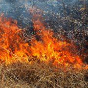 На Прикарпатті під час спалювання сухої трави згоріла жінка