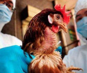 На Прикарпатті посилюють заходи щодо недопущення пташиного грипу