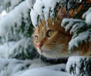 Тепло зникає: синоптик повідомила, коли вдарять морози в Україні