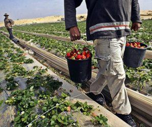 Заробітчани перерахували в Україну $12 млрд за рік