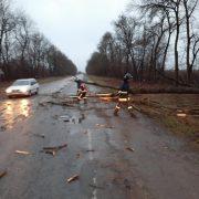 На Франківщині через сильний вітер на рейсовий автобус впало дерево