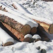 Калуш: протизаконна вирубка лісу продовжується